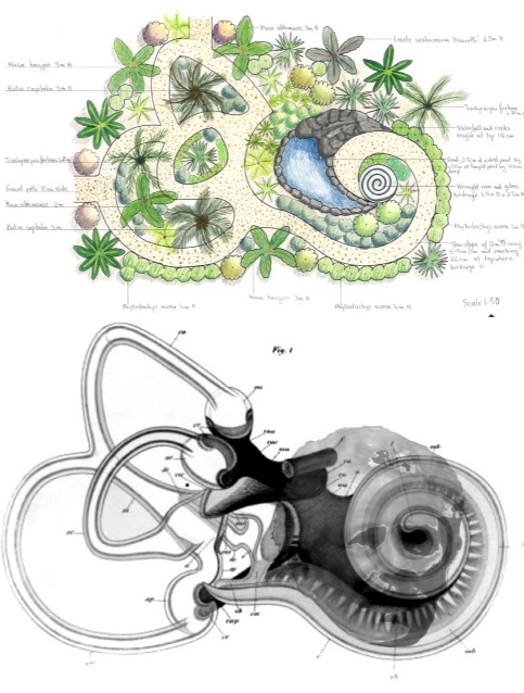 Design Layout Based on the Anatomy of the Inner Ear