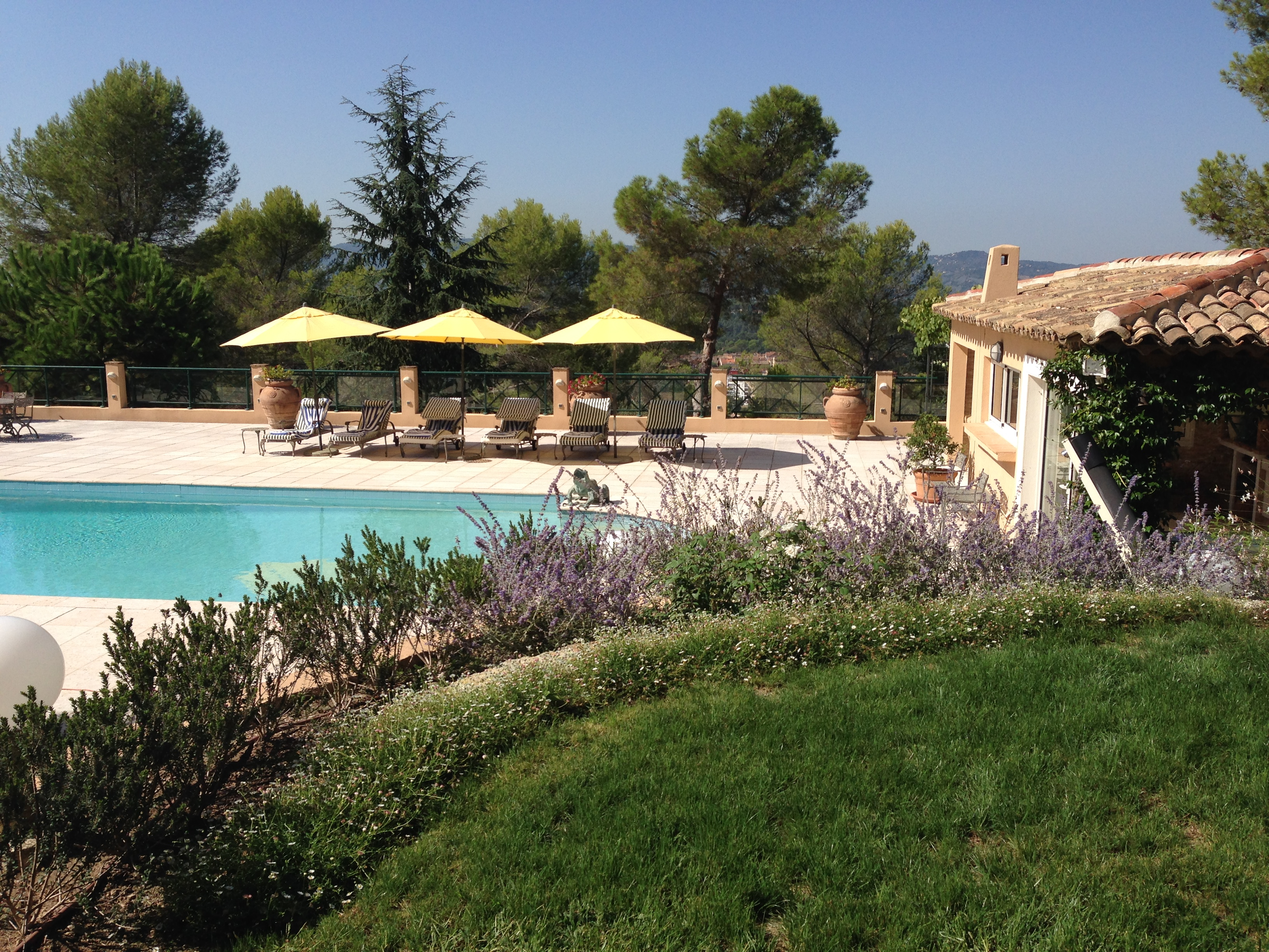 The young border which will keep the view open  towards the pool even when it matures.